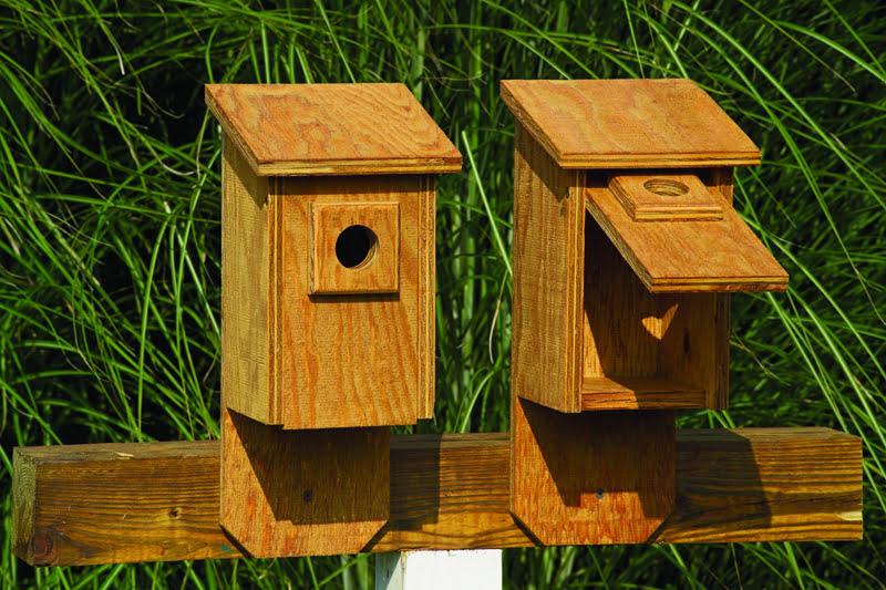 ffbh flip front birdhouse 1